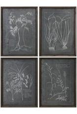 Root Study Print Art - Set of 4