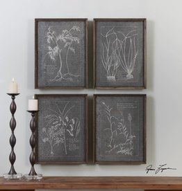 Root Study Print Art - Set of 4