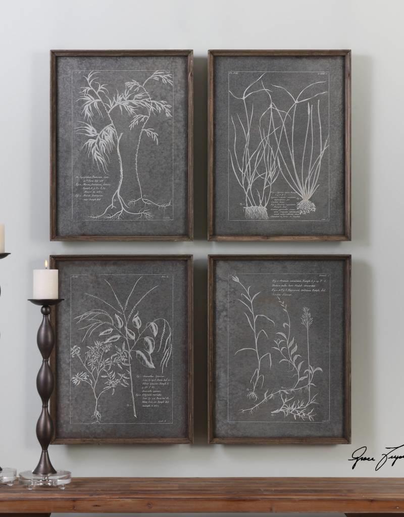 Root Study Art (Set of 4)