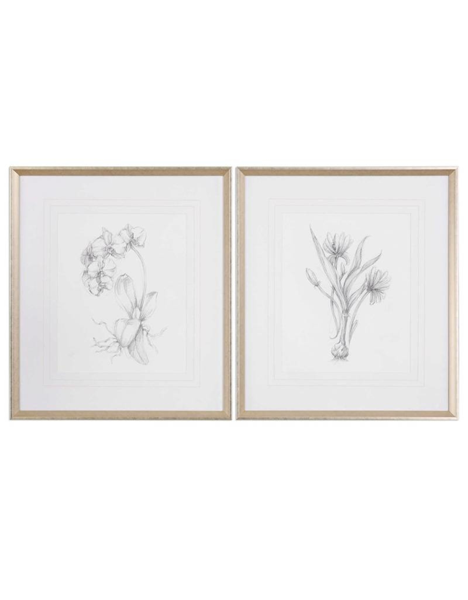 Botanical Sketches Framed Prints - Set of 2