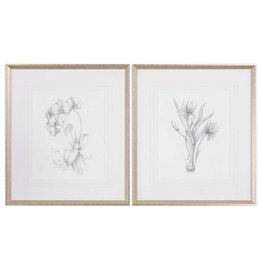 Botanical Sketches Framed Prints S/2