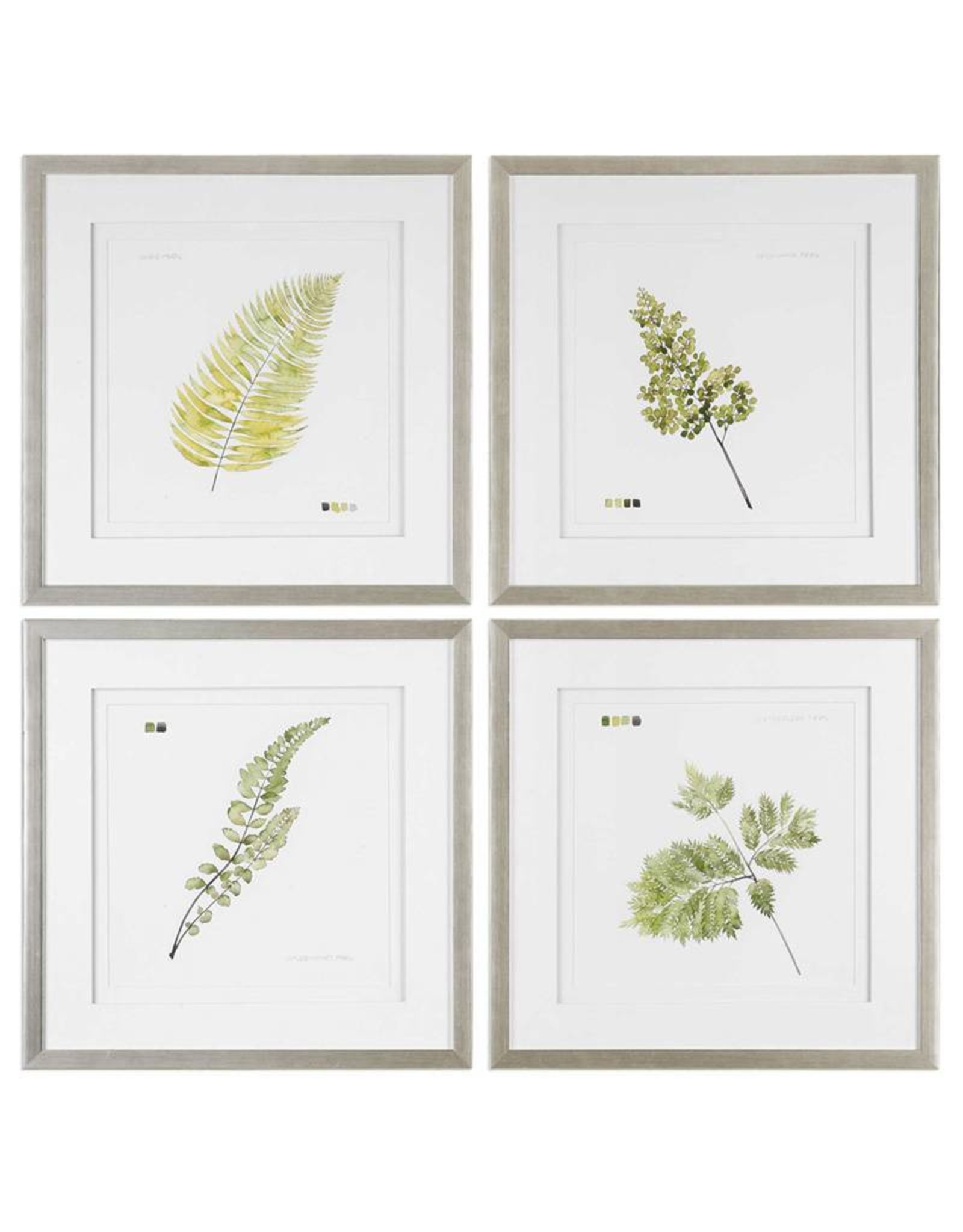 Watercolor Leaf Study Prints - Set of 4