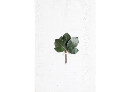 Kalalou Magnolia Leaf Spray