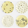 """Onehundred80degrees Busy Bees by Debbie Taylor-Kerman """"Paper"""" Plates"""