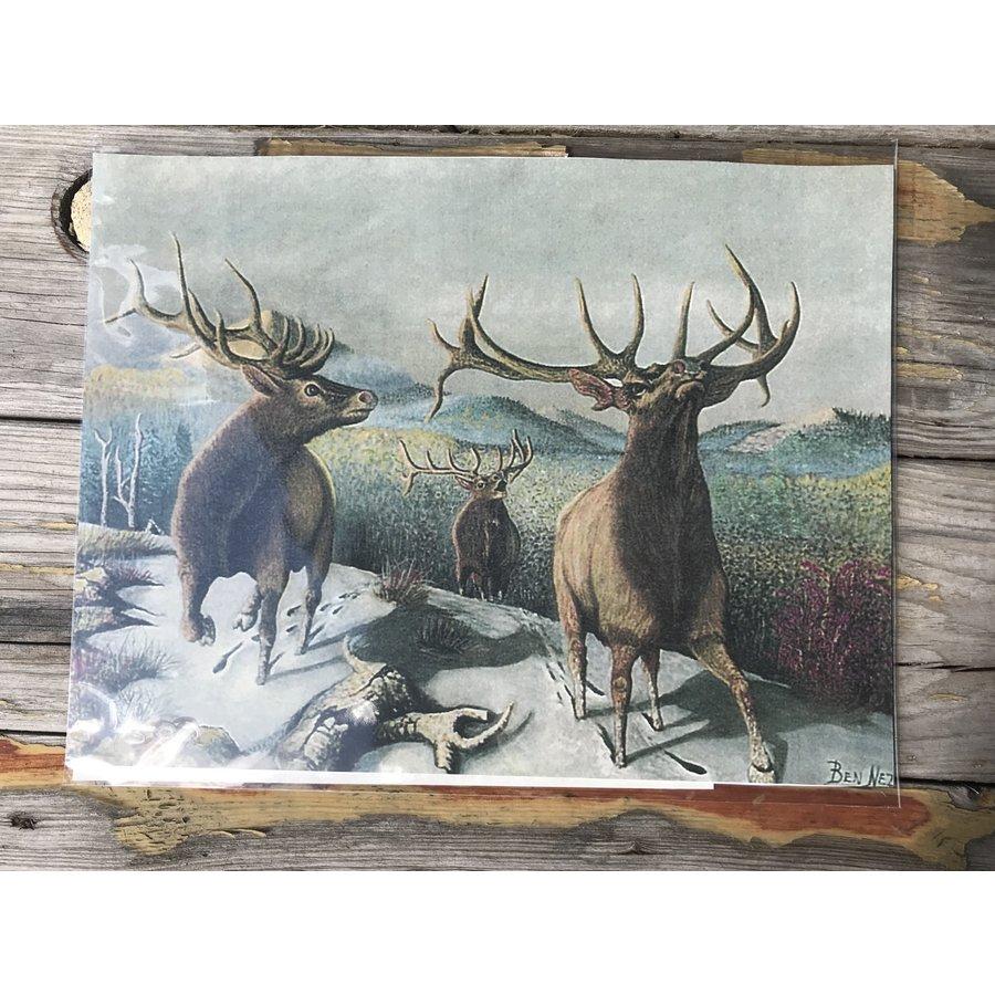 Colorado Elk Art Print