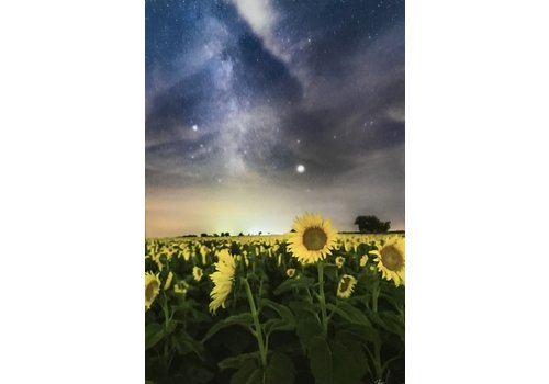 """34th State Media Stars and Sunflowers 16""""x24"""" Photo Board"""
