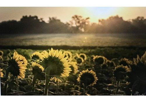 "34th State Media Sunflower Field 16""x24"" Photo Board"