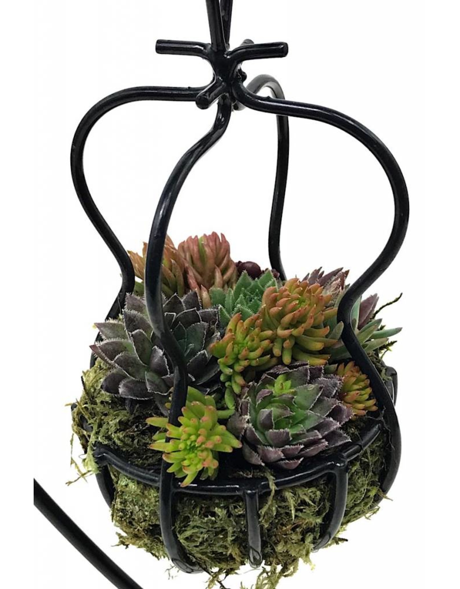 Our Smallest Hanging Basket