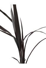 Phormium 'Black Adder' 1 gal