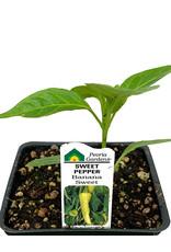 Pepper 'Banana Sweet - 4 inch