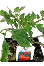Tomato 'Beefsteak' 4 Inch
