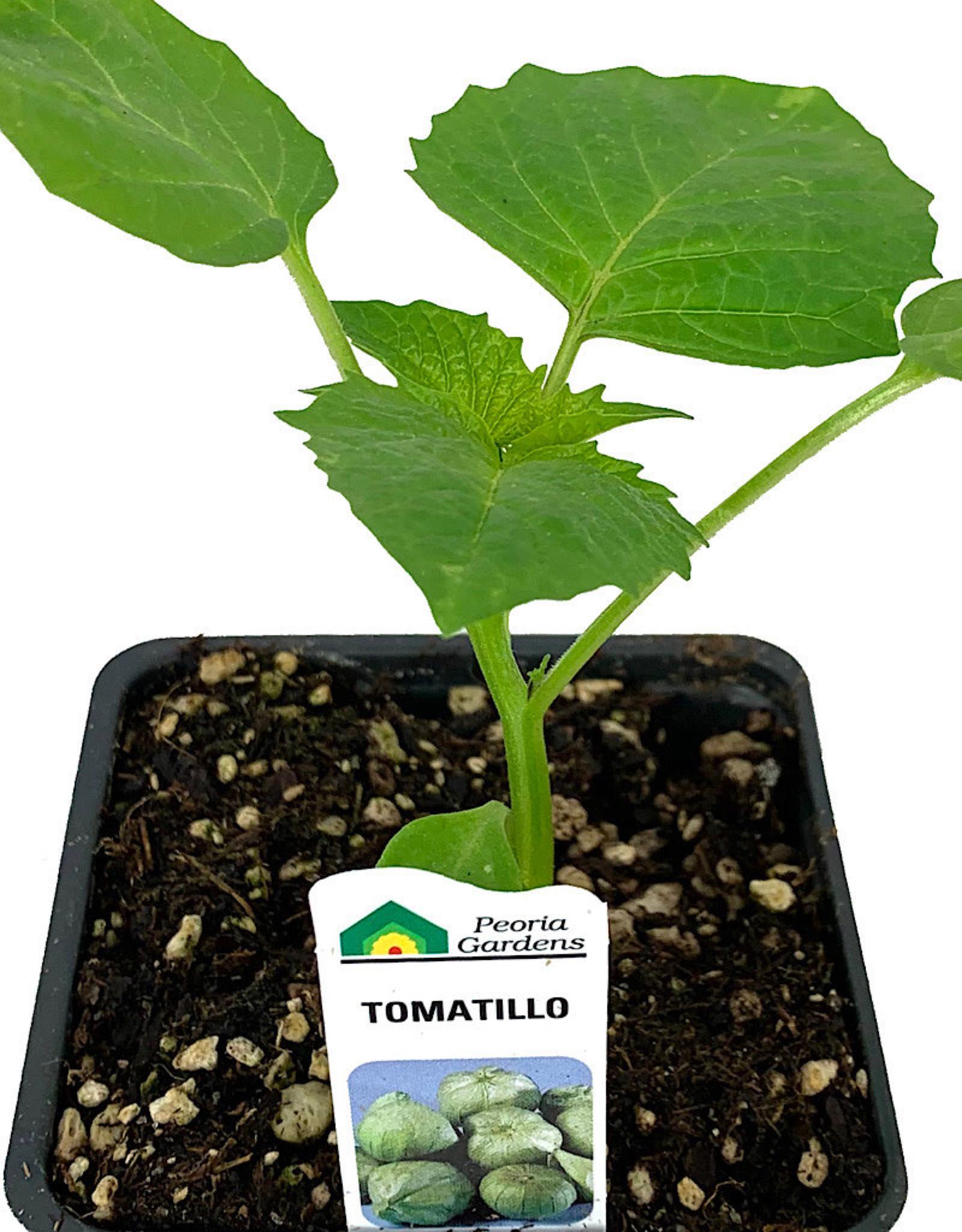 Tomatillo 4 Inch