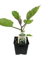 Eggplant 'Little Fingers' - 4 inch
