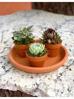 Plant Party Platter