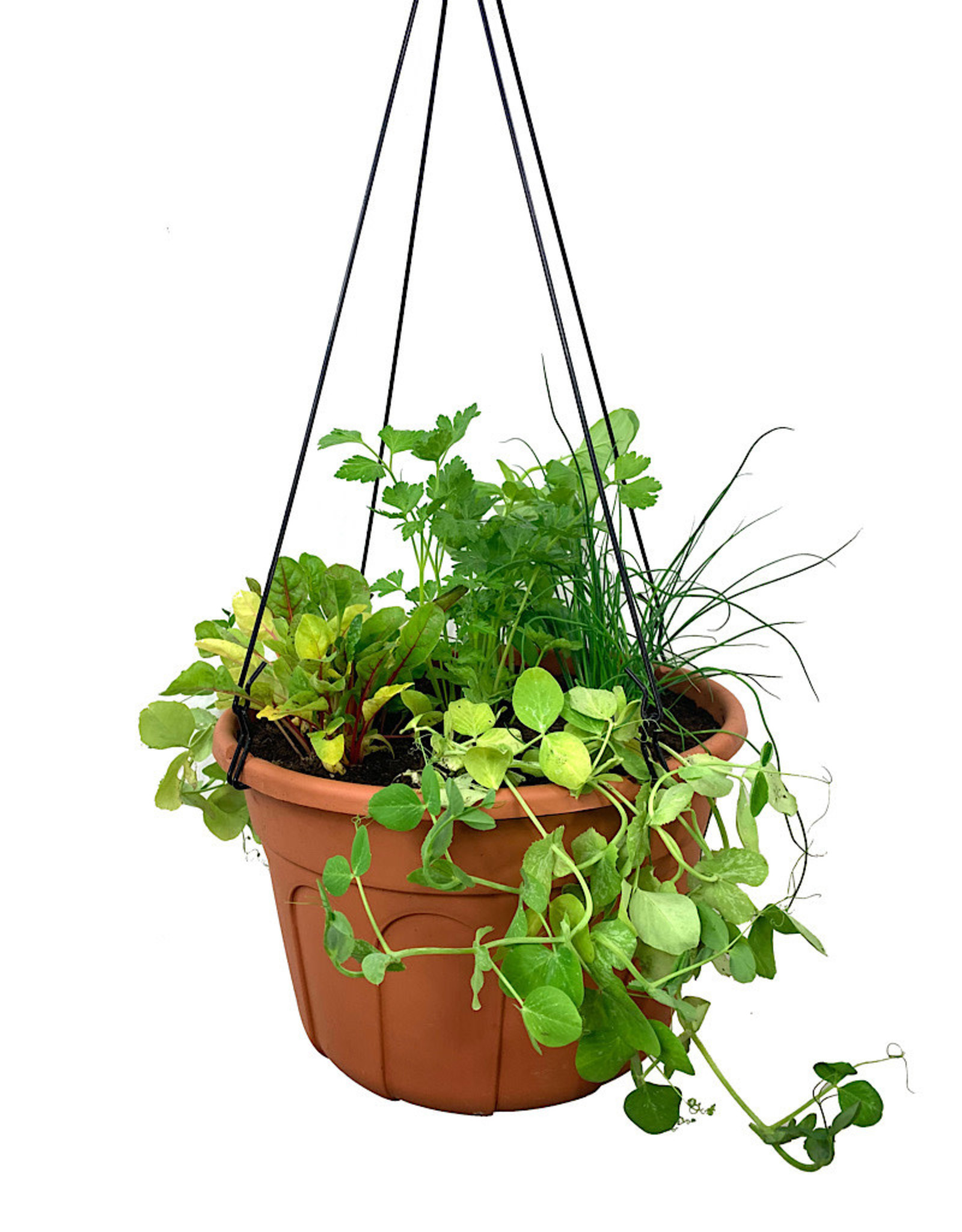 Edible Hanging Garden 2
