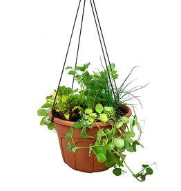 Edible Hanging Garden 2