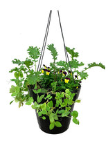 Edible Hanging Garden 3