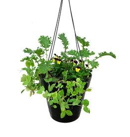Edible Hanging Garden 3