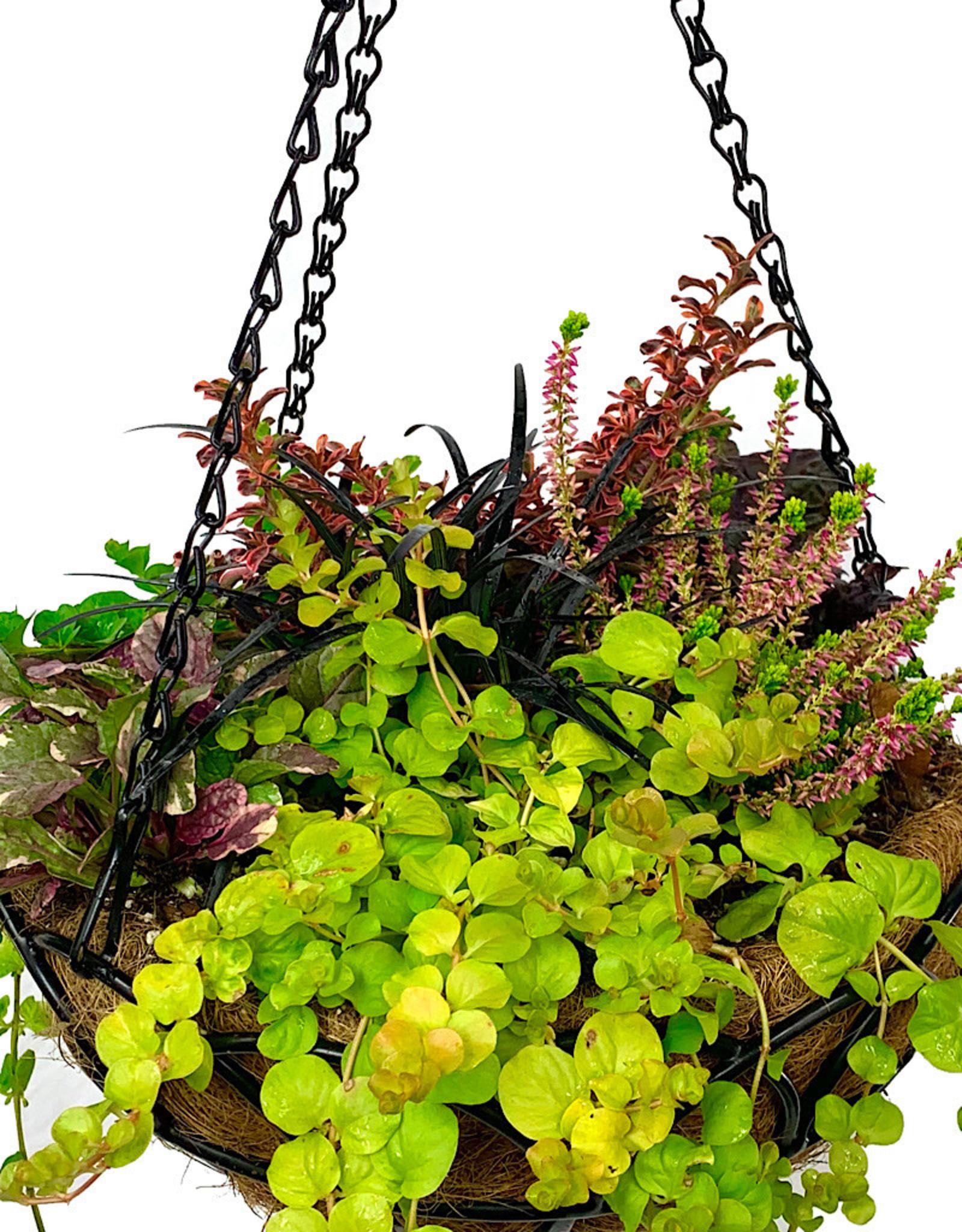 Hanging Garden 46
