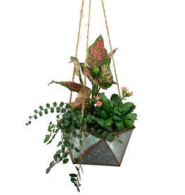 Hanging Garden 22