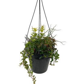 Hanging Garden 18