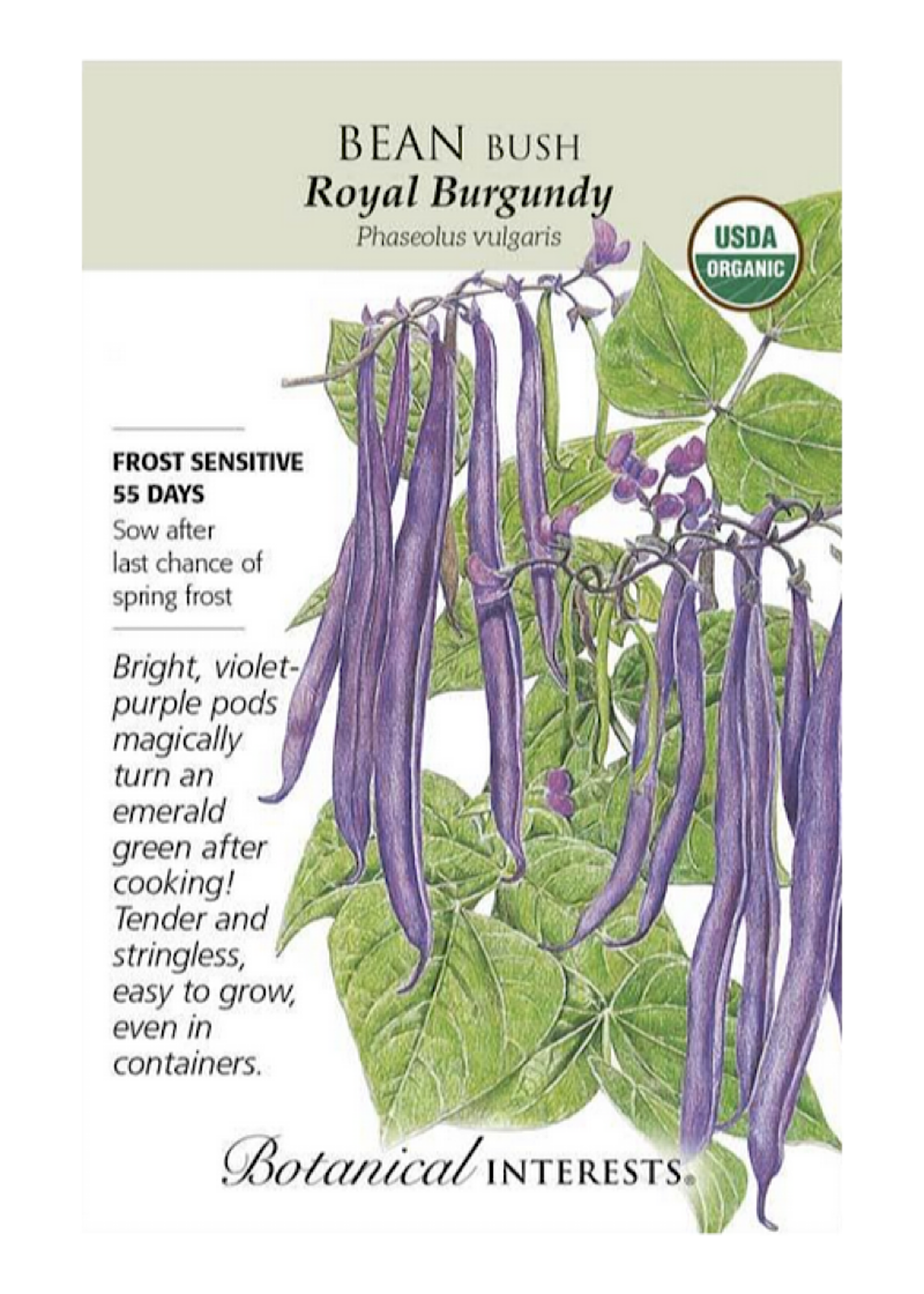 Bean Bush 'Royal Burgundy' Seed Pack