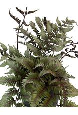 Athyrium niponicum 'Godzilla' 1 Gallon