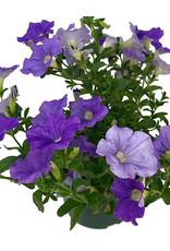 Petunia 'Surfinia Sky Blue' 6 Inch