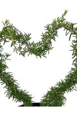 Rosmarinus Heart Topiary 1 Gallon
