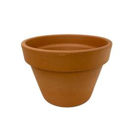 Azalea Terra Cotta Pot