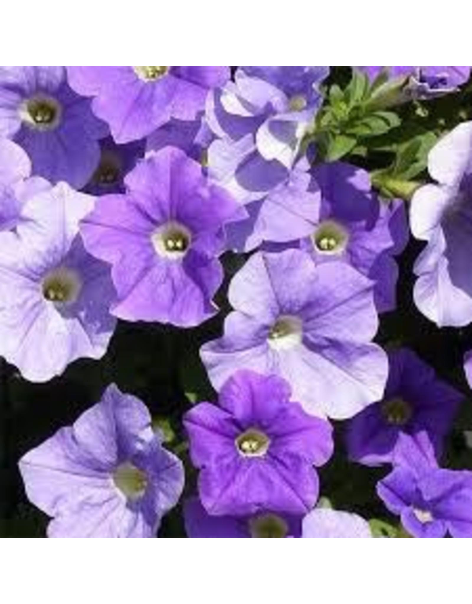 Petunia 'Surfinia Sky Blue' 4 Inch