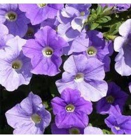 Petunia 'Surfinia Sky Blue'- 4 inch