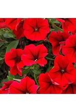 Petunia 'Surfinia Trailing Red'- 4 inch