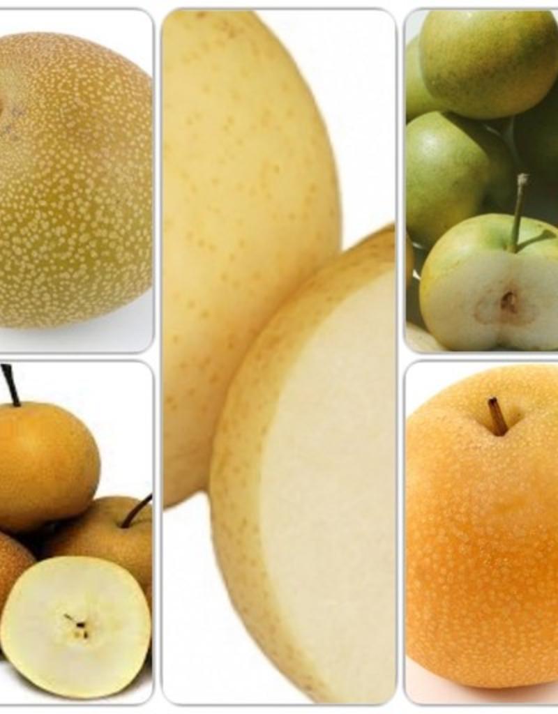 Pear Dwarf - Asian 5 Way Combination Pre-Order