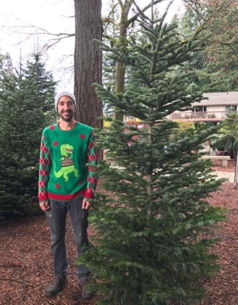 10' Natural Christmas Tree