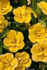 Calibrachoa 'Double Yellow' - 4 inch