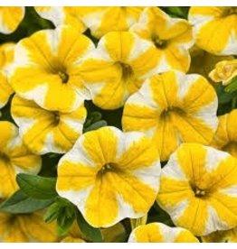 Calibrachoa 'Lemon Slice' 4 Inch