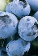 Blueberry 'Duke' - 1 gal