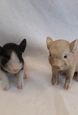 Baby Poly Pig