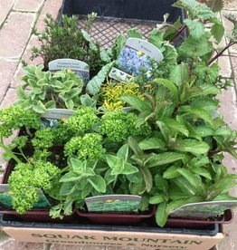 "9 Herb Variety Pack - 4"" Pots - Grower's Choice"