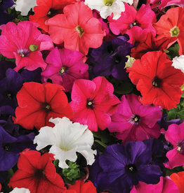 Squak Mtn Petunia 'Pretty Grand Mix' Jumbo Pack