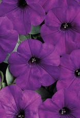 """Squak Mtn Petunia 'Easy Wave Blue' 4"""" Pot"""