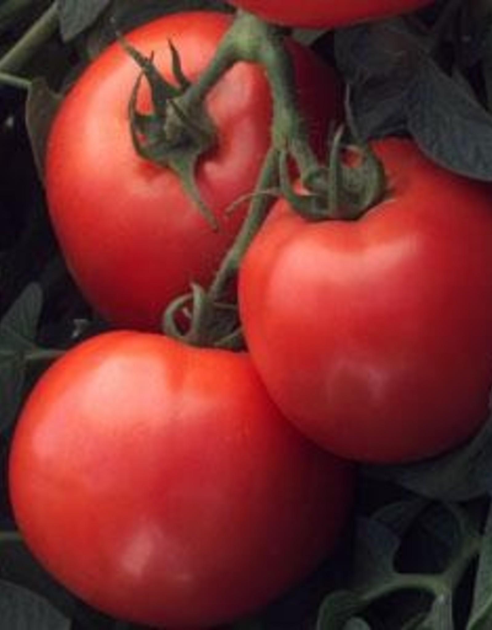 "Squak Mtn Tomato 'Early Girl' 2"" Pot"
