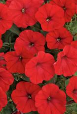 "Squak Mtn Petunia 'Starlet Red' 4"""