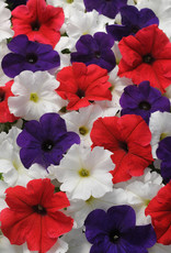 Squak Mtn Petunia 'Pretty Grand Mix' Jumbo Pack