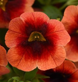 Squak Mtn Calibrachoa MiniFamous Neo 'Lava Red Eye' 4""