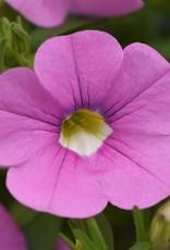 "Squak Mtn Calibrachoa MiniFamous Neo 'Light Pink' 4"""