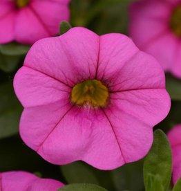 "Squak Mtn Calibrachoa MiniFamous Neo 'Pink' 4"""
