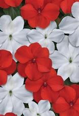 Squak Mtn Impatiens Beacon 'Red White Mix' Jumbo Pack