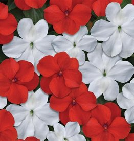 Squak Mtn Impatiens Beacon 'Red White Mix' Jumbo Pack
